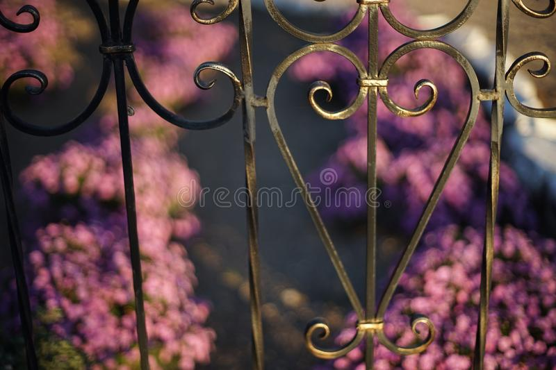 Black forged fence against a background of purple flowers in the garden in blur royalty free stock photos