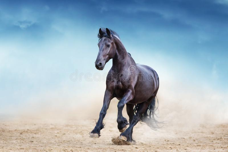Black frisian stallion royalty free stock photos
