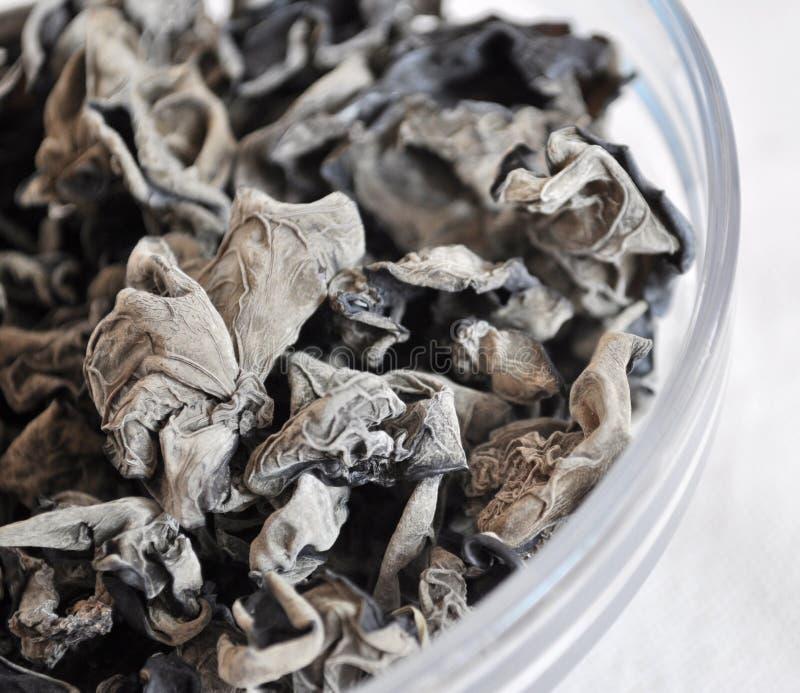 Black fungus stock photography