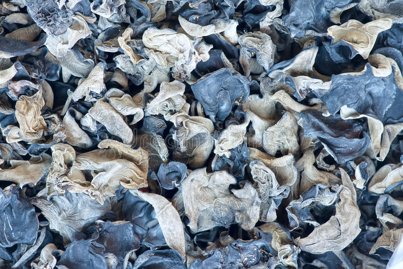 Download Black fungus stock photo. Image of eating, eatable, food - 26285862