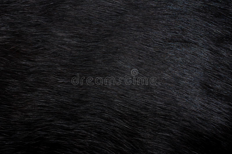 Download Black fur. Background stock photo. Image of fauna, closeup - 21393634