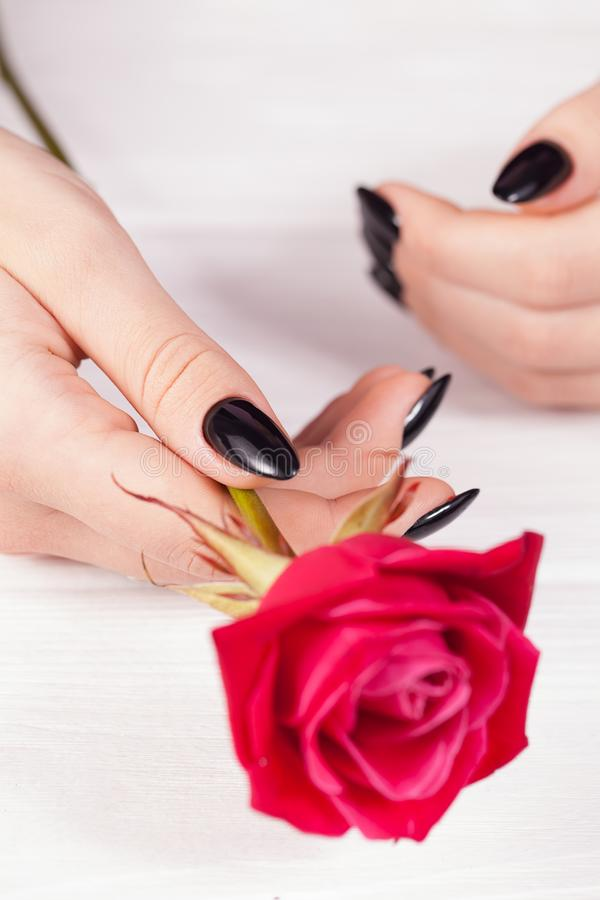 Black glossy nails design close-up. Holding rose. White Background royalty free stock photography