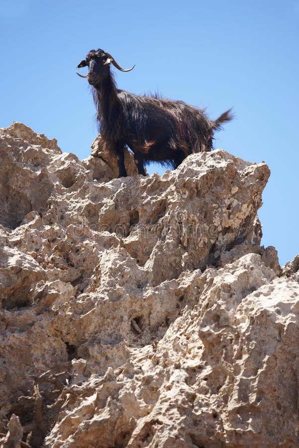 Free Black Goat In A Rock. Crete. Greece Stock Image - 43912041