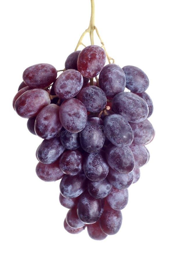 Black grape royalty free stock photography