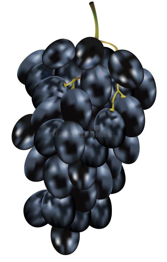 Black Grapes stock illustration