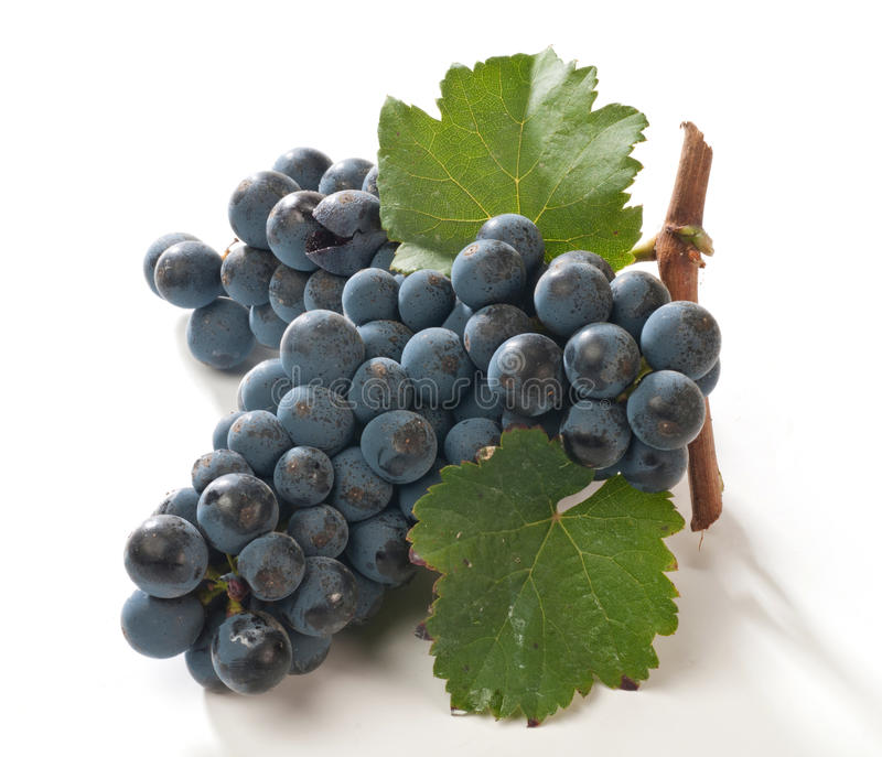Black grapes. For wine with leaves stock image