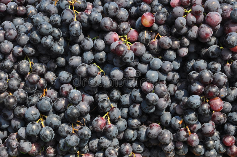 Download Black Grapes Stock Photos - Image: 25806093