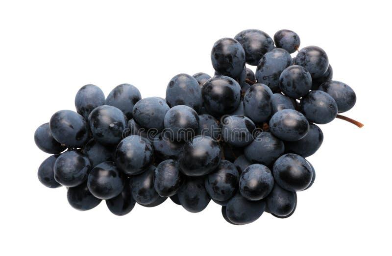 Black grapes royalty free stock photo