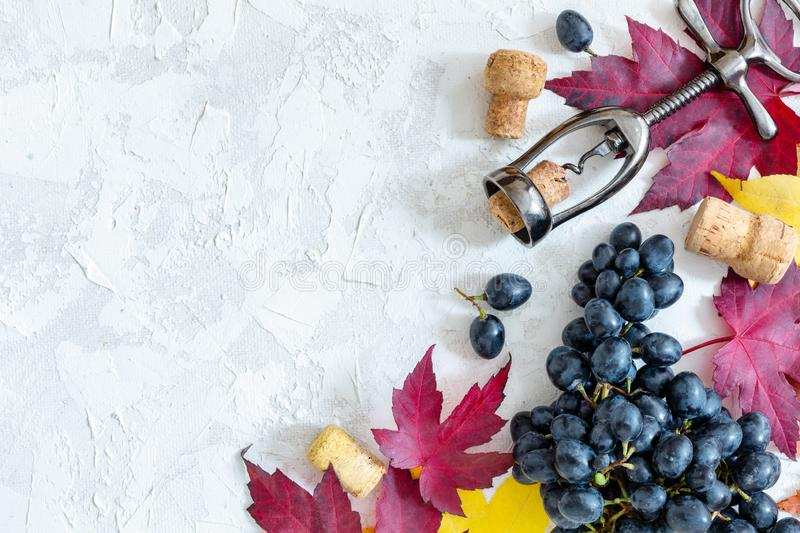 Black grapes, corkscrew and colorful autumn leaves royalty free stock photography