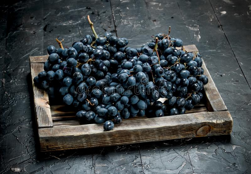 Black grapes on a wooden tray. On black rustic background stock photo