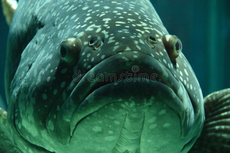 Black Gray Fish On Focus Photo Free Public Domain Cc0 Image