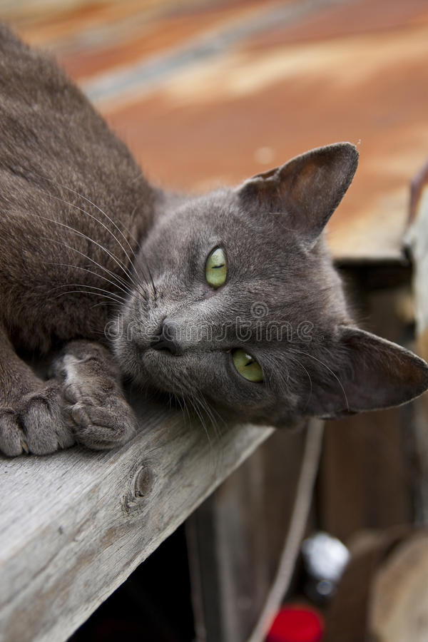 Download Black green-eyed cat stock photo. Image of fluffy, kitty - 14269692