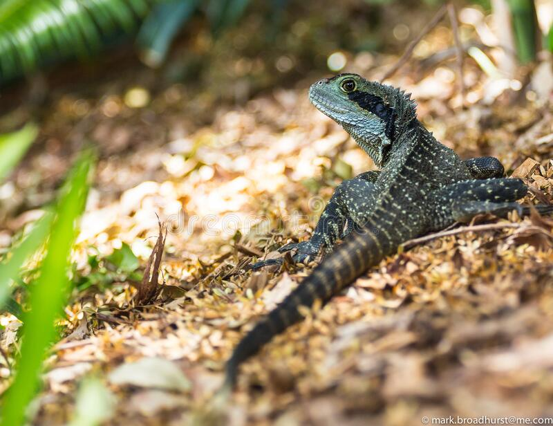 Black and Green Lizard during Daytime stock photo