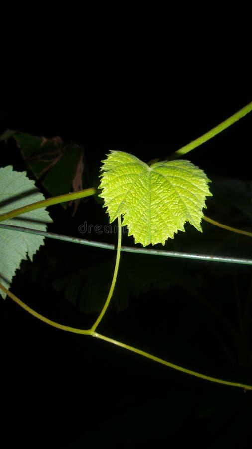 Single leafe stock photography