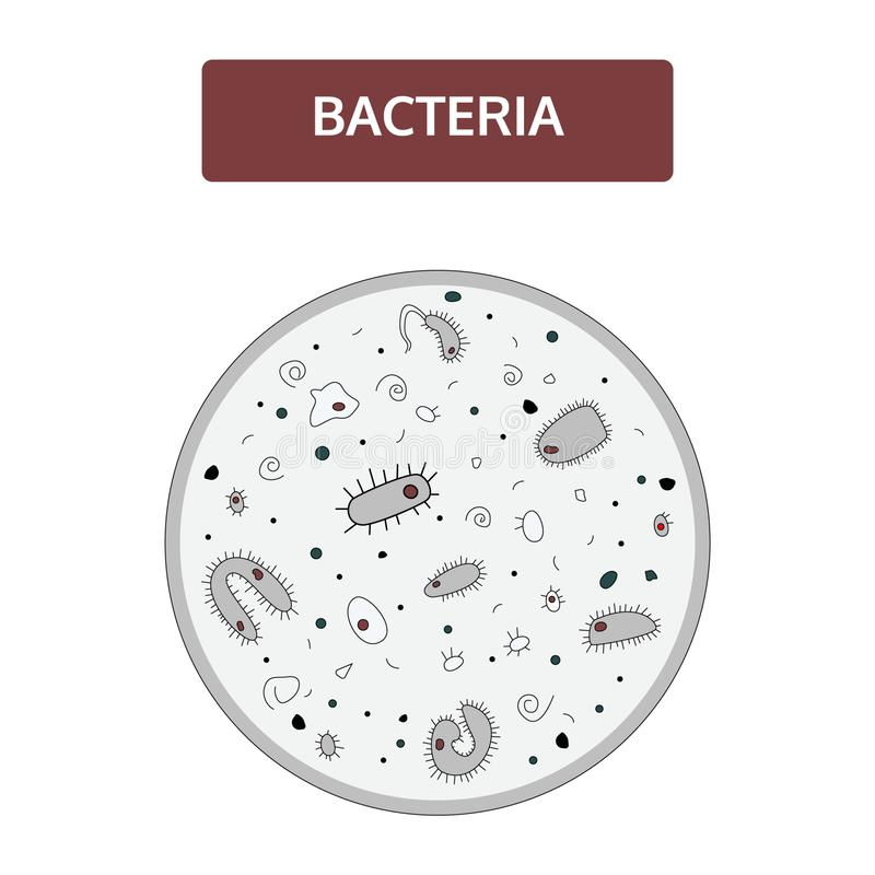 Black and grey bacteria with a red nucleus under a microscope. Doodle, hand drawn style vector illustration