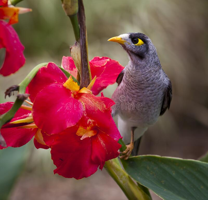 Black Grey White Yellow Bird Near on Pink Petal Flower stock image