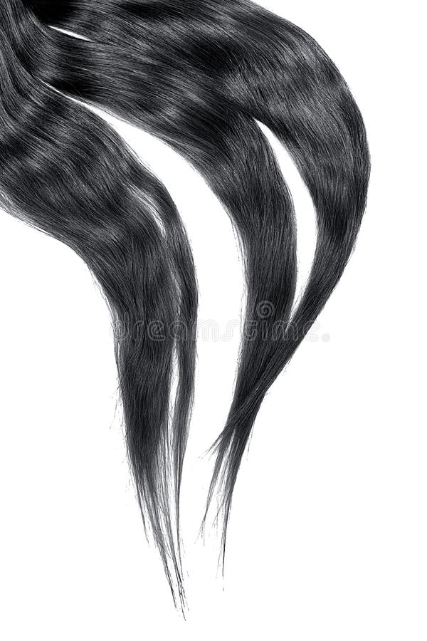 Black hair isolated on white background. Long disheveled ponytail. Natural healthy hair isolated on white background. Detailed clipart for your collages and stock photo