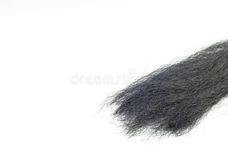 Black hair in white background. Hair theme, detailed black female hair in white background stock images