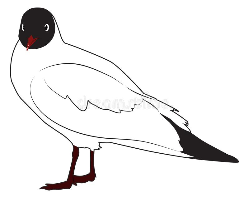 Black headed gull. Is standing sideways turning its head. Vector illustration stock illustration