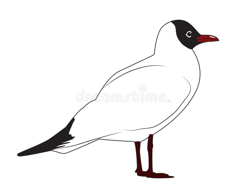 Black headed gull. Is standing sideways. Vector illustration royalty free illustration