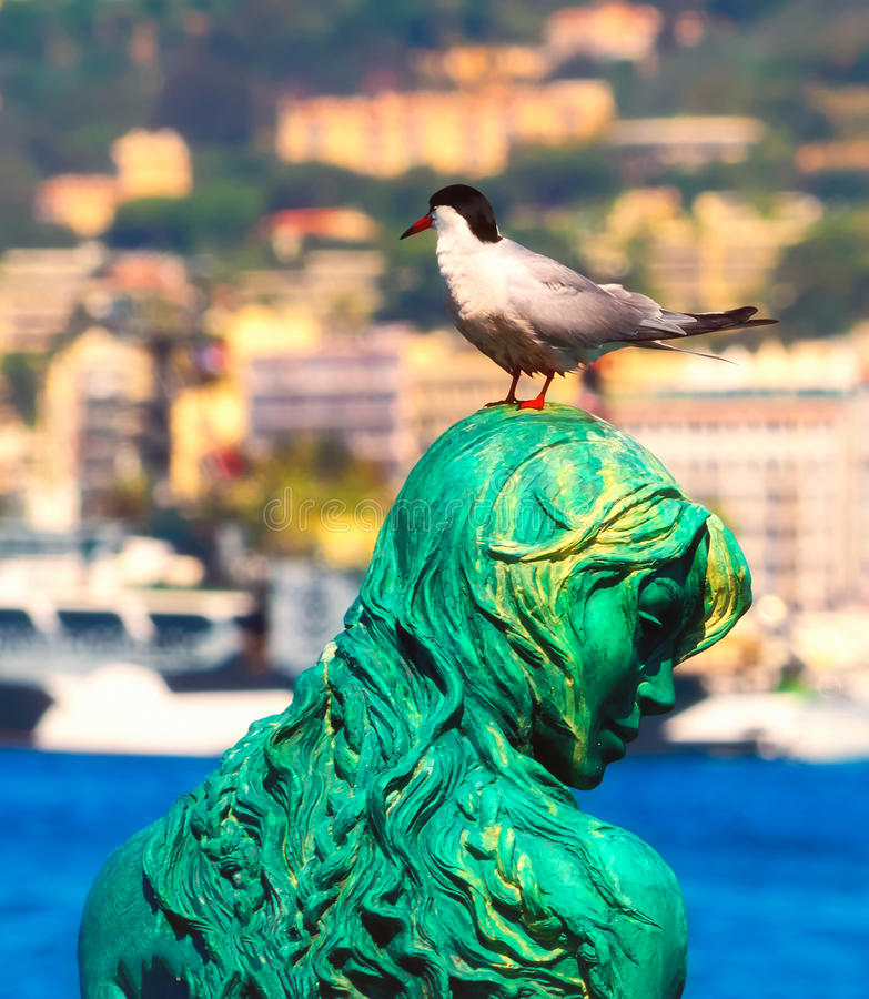 Black headed seagull at Port Pierre Canto in Cannes. A black-headed gull is relaxing on Atlante`s head, the statue of a mermaid just outside Port Canto in Cannes royalty free stock image