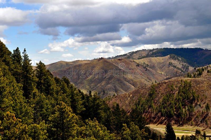 Black Hills южное Dakota-1-3 стоковая фотография