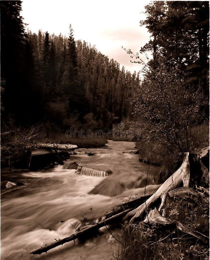 Black Hills Photographie stock
