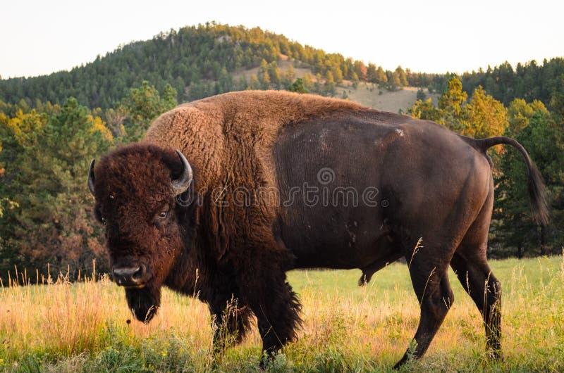 Black Hills fotografia de stock