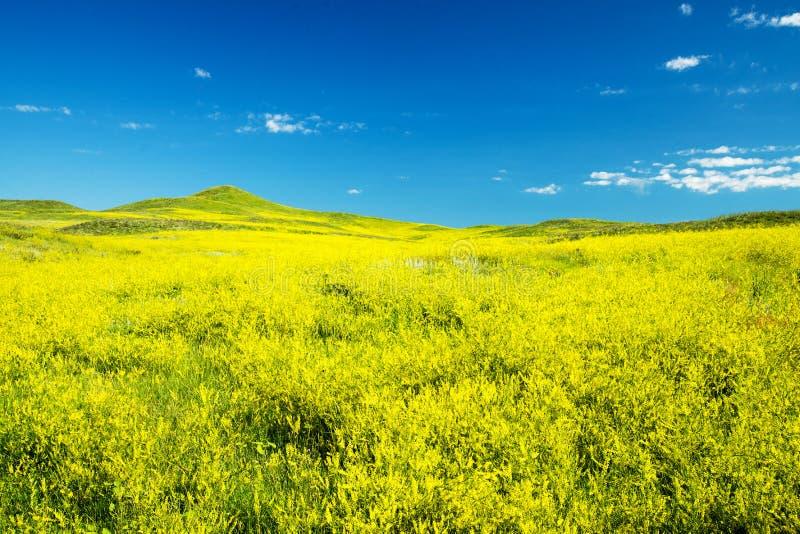 Black Hills Dakota del Sur fotografía de archivo