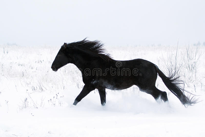 Download Black Horse stock photo. Image of snow, horse, walk, animal - 28365108