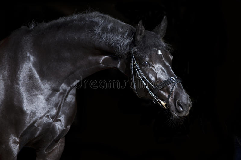 Black horse on black background stock images