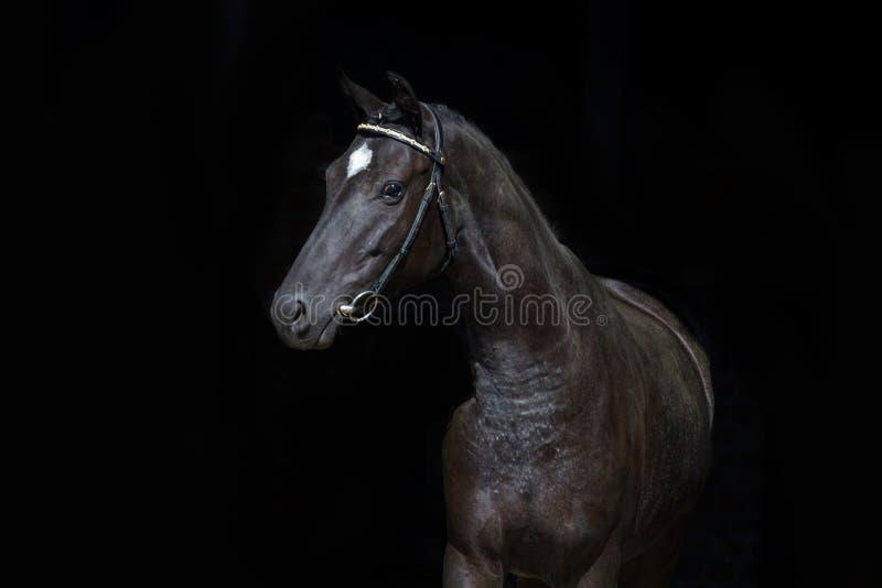 Black horse on black stock photos