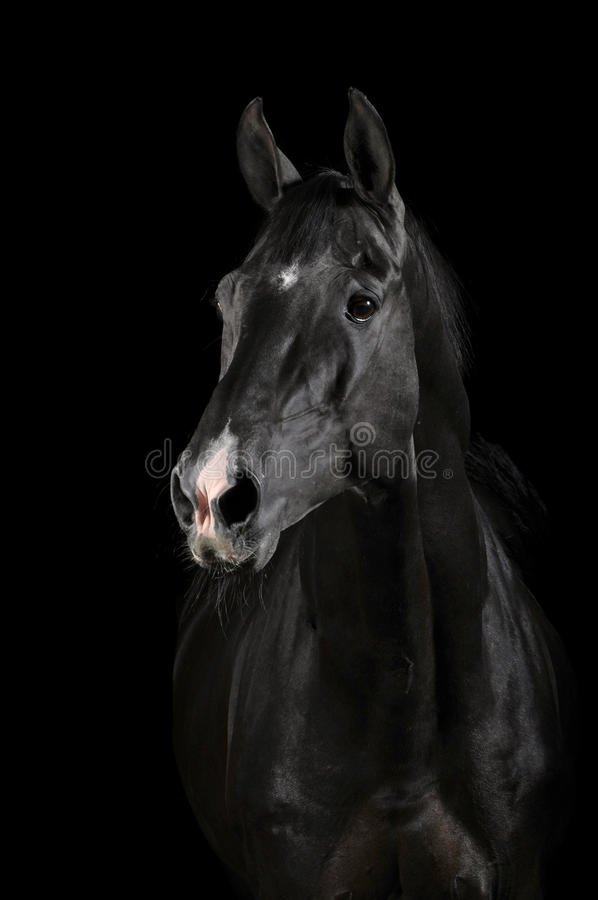 Black horse in darkness royalty free stock image