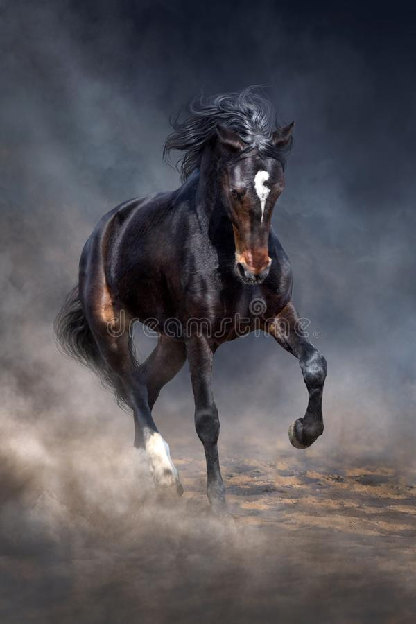 Black horse in dust stock images