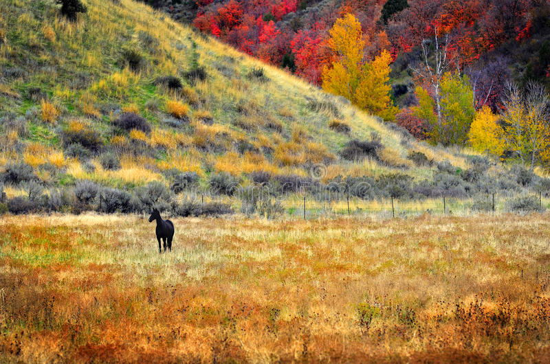 Black Horse in Field Meadow in Fall stock photos