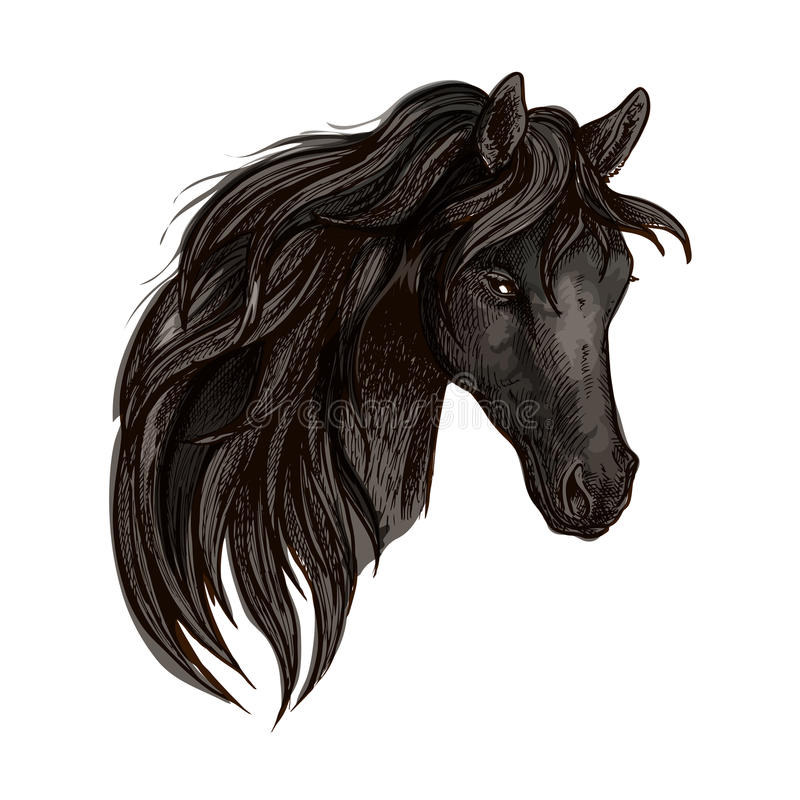 Black horse head watercolor portrait vector illustration