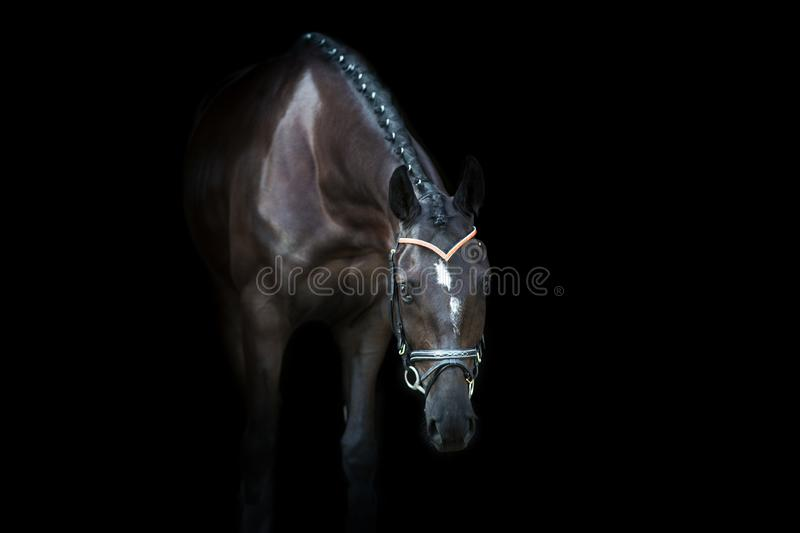 Black horse portrait. On black background royalty free stock photo
