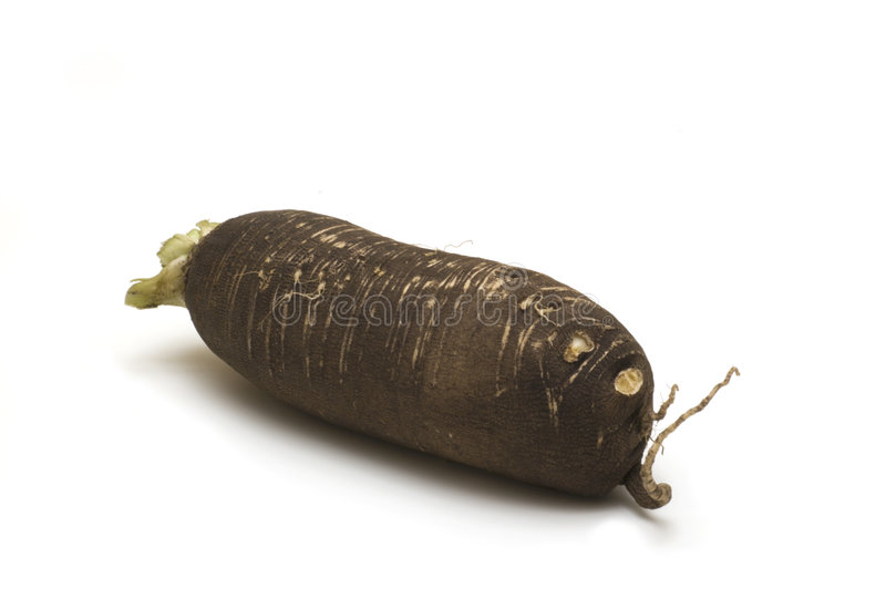 Black horseradish royalty free stock photos