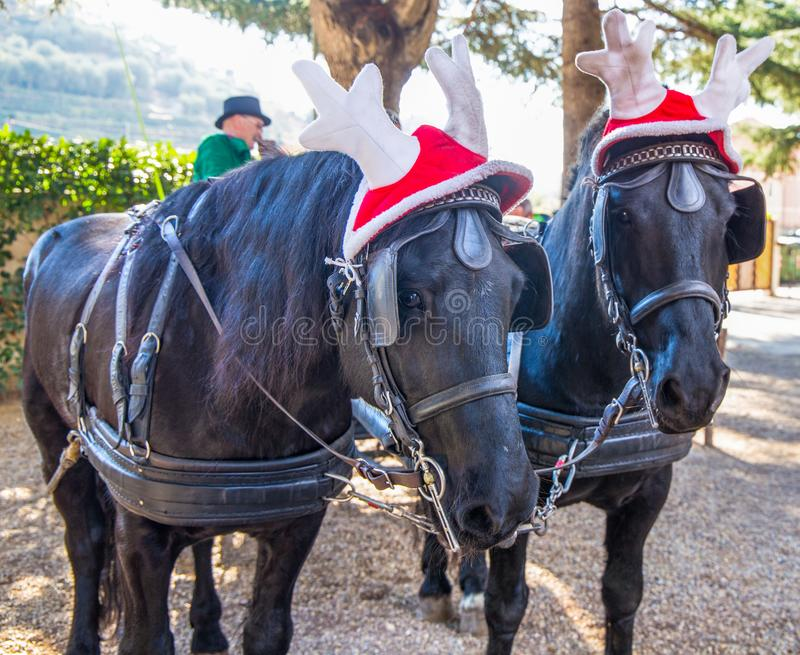 Black horses with carriage with funny Christmas hats, Italy. Black horses with carriage with funny Christmas hats royalty free stock image