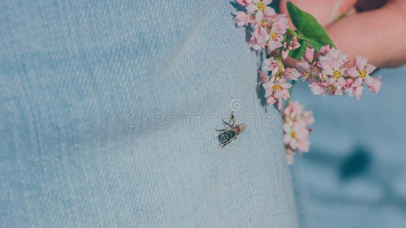 Black Housefly on Person's Jeans royalty free stock image