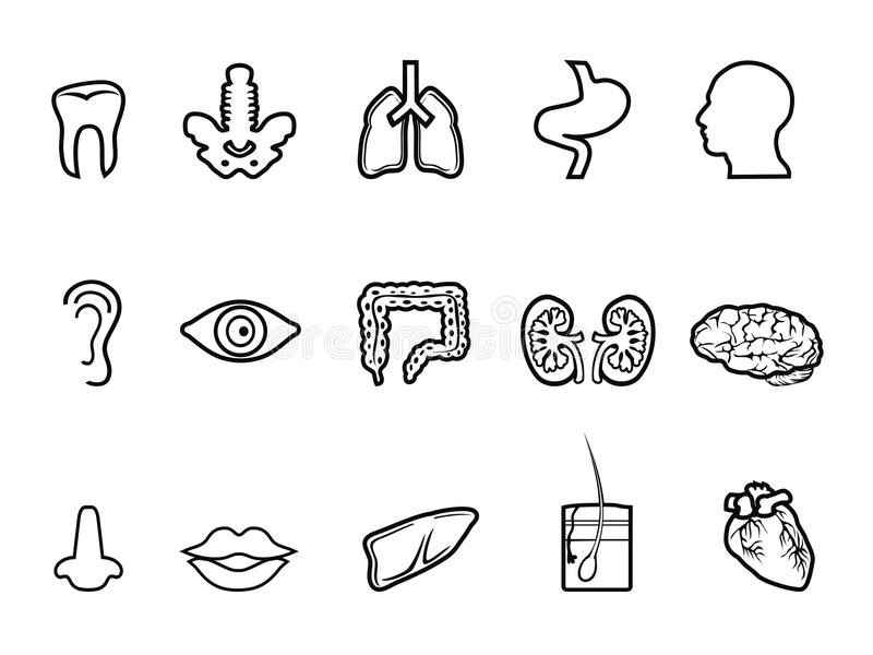 Black human anatomy outline icon royalty free illustration