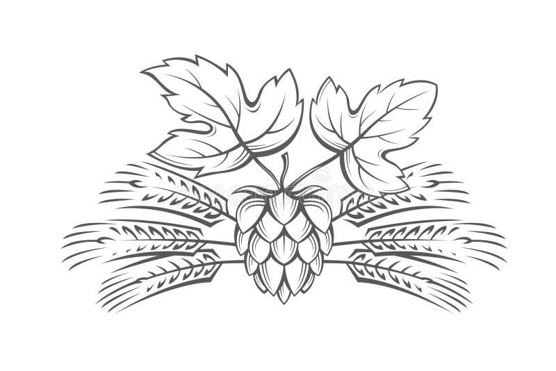 Image of hop and barley ear. Black illustration of hop and barley ear for brewing vector illustration