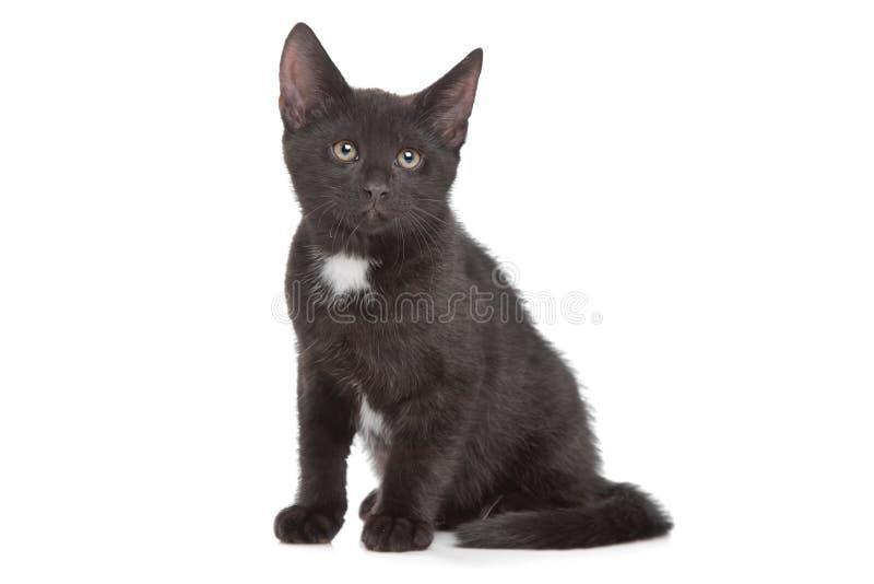 Download Black kitten stock image. Image of animal, alone, kitty - 25082311