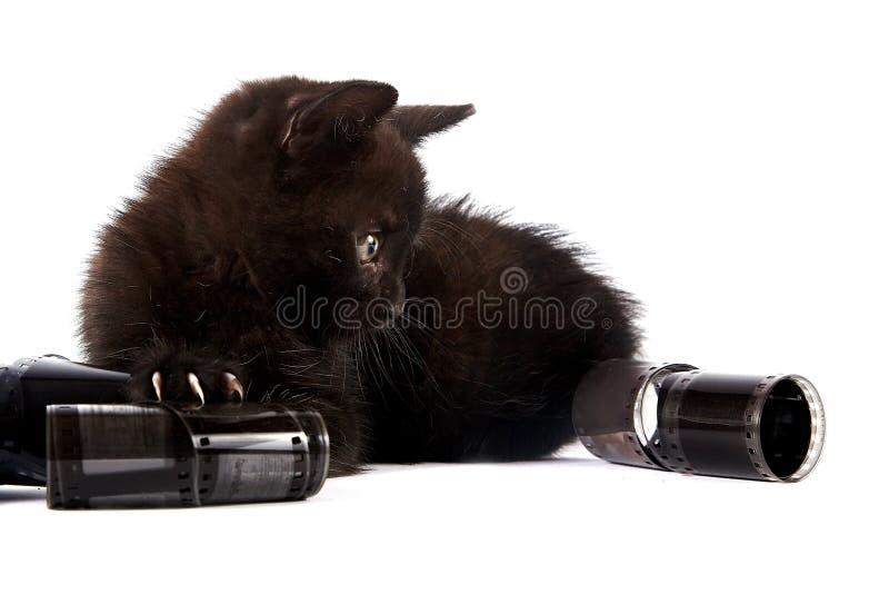 Download Black kitten stock photo. Image of fluffy, cheerful, kitten - 27721748