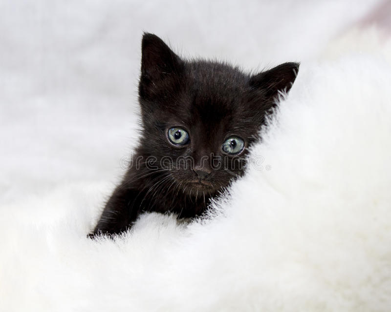 Black kitten with big blue green eyes stock photography