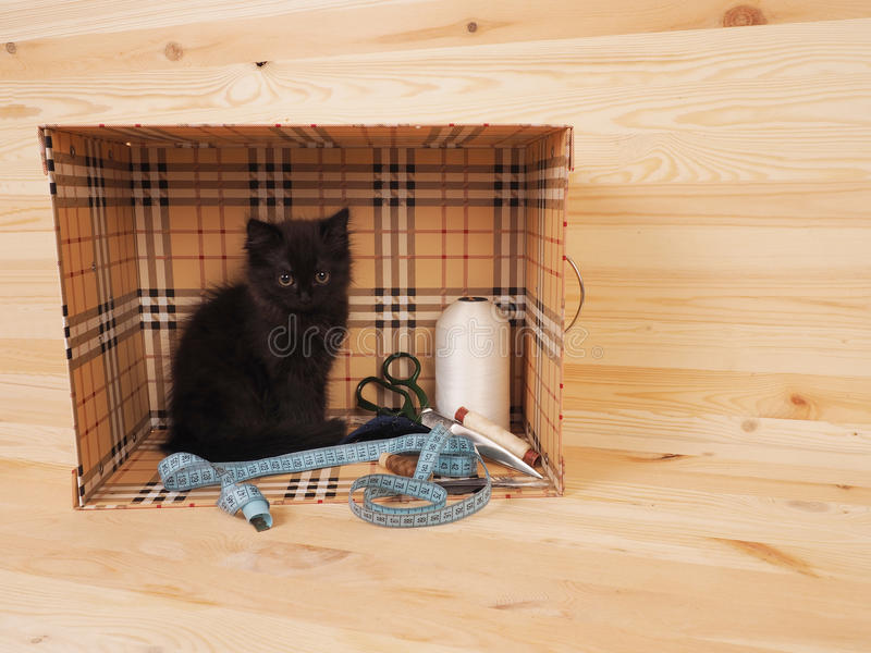 Black kitten in a box with items for sewing.  stock image