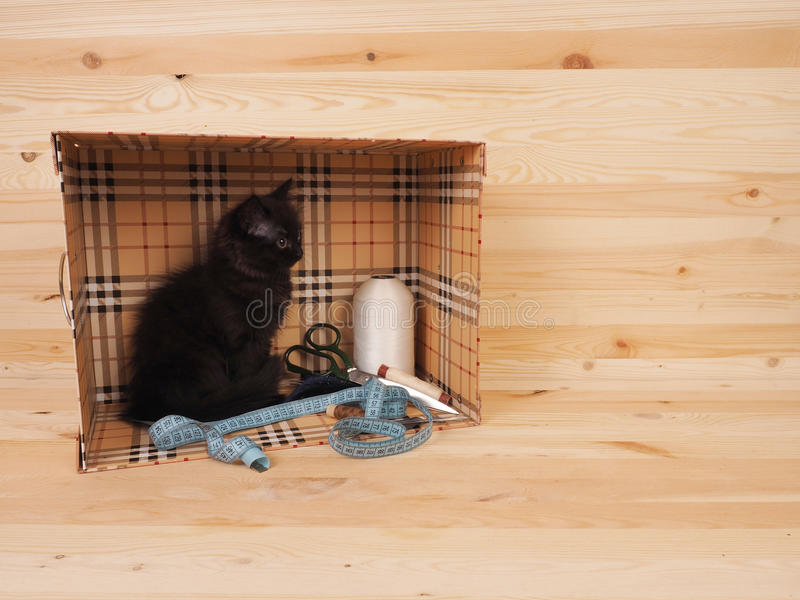 Black kitten in a box with items for sewing.  royalty free stock photos