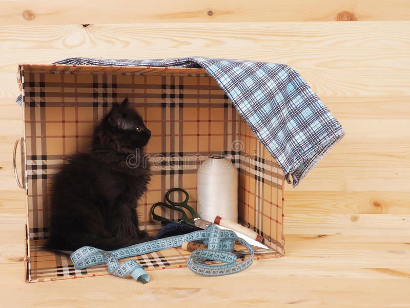 Black kitten in a box with items for sewing.  stock photos