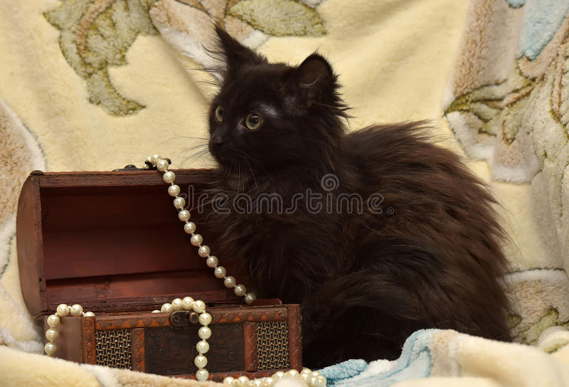 Black kitten. Casket, beads of pearls royalty free stock images