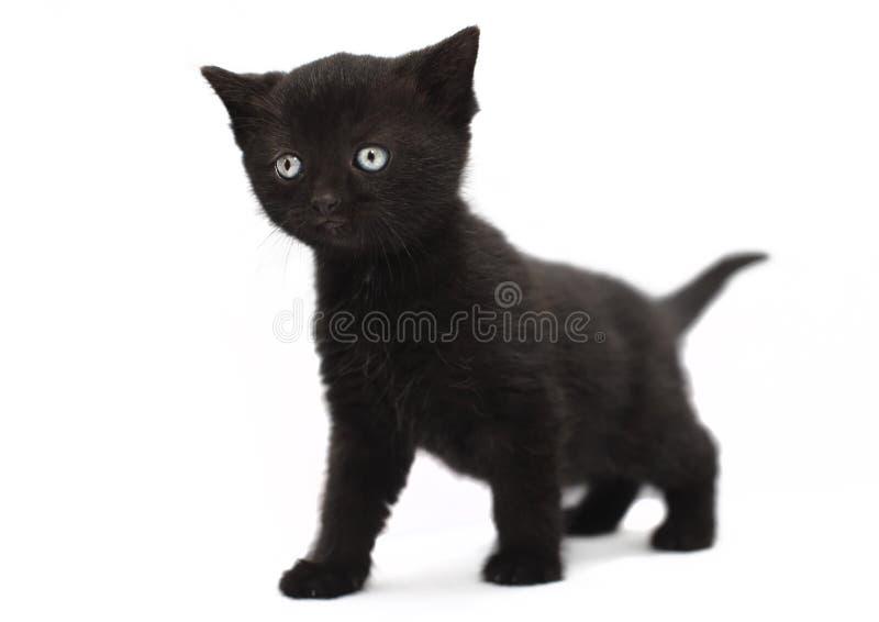 Black kitten cat. On white background stock photo